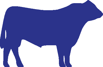 cattle-blue